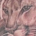 Tattoos - Jason's SD Mountain Lion - 13220